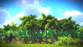 Lush vegetation in jungle Royalty Free Stock Images
