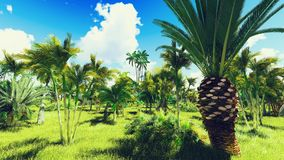 Lush vegetation in jungle Stock Photography