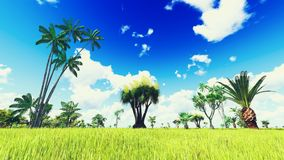 Lush vegetation in jungle Royalty Free Stock Photography