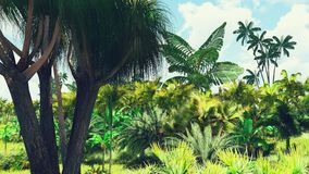 Lush vegetation in jungle Royalty Free Stock Photos
