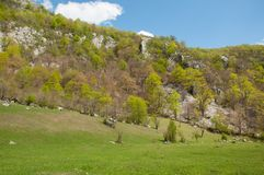 Lush vegetation on limestone mountain valley Stock Images
