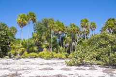 Lush vegetation on natural beach in Tropes Stock Images