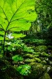Lush vegetation Royalty Free Stock Images