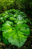 Lush vegetation Stock Images
