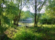 Lush vegetation next to a small pond Stock Images