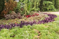 Round flowerbed of purple plants. Stock Images