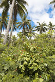 Lush vegetation on Pacific Island Royalty Free Stock Images