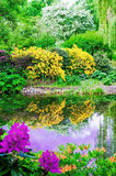 Lush vegetation by the pond Royalty Free Stock Photo