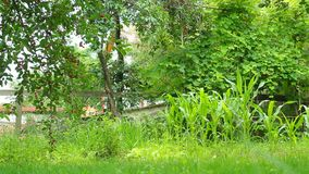 Lush vegetation. Slider shot of urban garden with lush vegetation stock video footage