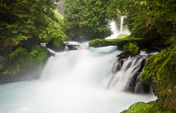 Lush Vegetation and Smooth Water on the McKenzie River, Oregon, USA Royalty Free Stock Photos
