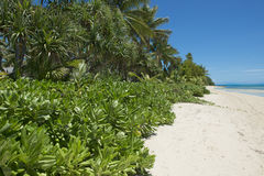Lush vegetation on tropical beach Stock Images
