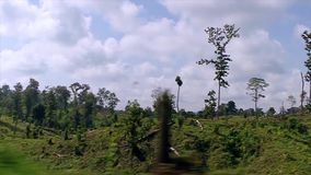 Lush vegetation. View of the jungle from a train window. Lush vegetation stock video