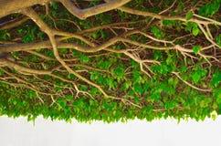 Lush Verdure Stock Photography