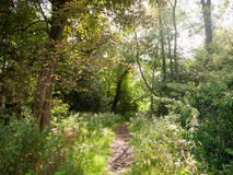 Lush and vibrant country path scene outside no people Stock Photo
