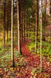 Lush vibrant woodlands path during the autumn. Fall, colorful foliage and trees royalty free stock image