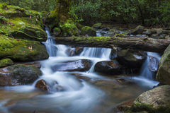 Lush waterfall in South Carolina. Lush forest and cascading waterfall in South Carolina Royalty Free Stock Images