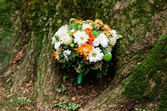 Lush wedding bouquet of white and orange chrysanthemums. Under a tree covered with moss Stock Images