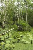Lush wetlands. Stock Images