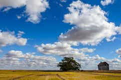 Lush, white cumulus clouds against the blue sky over a yellow be. Veled field with a green tree, a haystack and an old house on a clear summer day Royalty Free Stock Photos