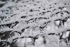 Lush winter frost on the branch in the morning time. Frost enveloping in the morning time on the grid Royalty Free Stock Photos