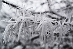 Lush winter frost on the branch of a tree. Frost enveloping a frozen tree in the morning time stock photography