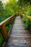Lush Wooden Path Royalty Free Stock Photos