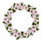 A lush wreath of pink cherry flowers and brightly green cherry leaves on a white background. Natural round frame for text. The symbol of spring. Vector royalty free illustration