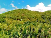 Lushful green hill of the Tabuelan. A lushful green mountain view of Tabuelan a northern town of Cebu, where beautiful white beaches can also be discovered Stock Image