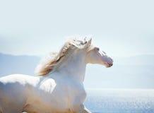 Lusitano-Pferdeportrait gegen Seehintergrund mit Hintergrundbeleuchtung Stockbild