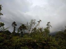 Lusong Laku Royaltyfri Fotografi