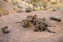 Lustige Affefamilie in alten Hampi-Ruinen Stockbilder
