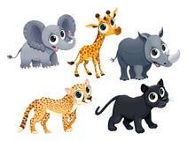Lustige afrikanische Tiere Lizenzfreie Stockfotografie