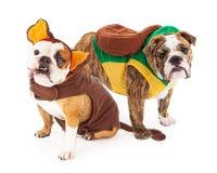 Lustige Bulldoggen in Halloween-Kostümen Lizenzfreie Stockfotografie