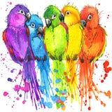 Lustige bunte Papageien mit dem Aquarellspritzen gemasert Stockfotografie