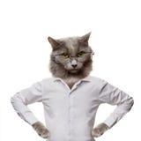 Lustige flaumige Katze in Gläsern. Collage auf einem Weiß Lizenzfreie Stockbilder
