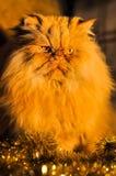 Lustige flaumige rote Katze mit Girlanden auf neuem Jahr lizenzfreies stockfoto