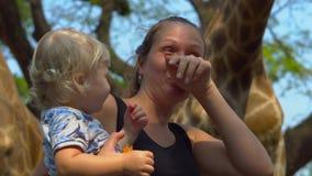 Lustige Frauenzufuhr eine Giraffe, die einen Frieden der Karotte in ihren Lippen in einem Safari-Park hält stock video footage
