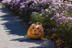 Lustige Halloween-Kürbiskatze in den Blumen Lizenzfreie Stockfotografie