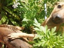 Lustige Hunde stockfotografie