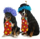 Lustige Hunde Stockbild