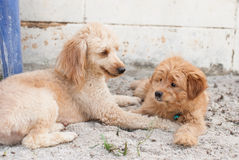 Lustige Hunde auf dem Sand Stockfotografie
