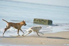 Lustige Hunde auf dem Strand Stockbild