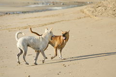 Lustige Hunde auf dem Strand Lizenzfreie Stockfotografie