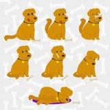Lustige Hunde eingestellt stockfoto