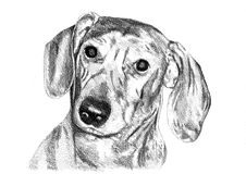Lustige Hundekunstillustration Lizenzfreie Stockbilder