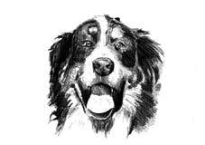 Lustige Hundekunstillustration Stockbilder