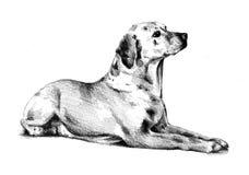 Lustige Hundekunstillustration Lizenzfreies Stockfoto