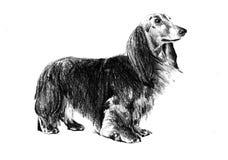 Lustige Hundekunstillustration Stockfotos