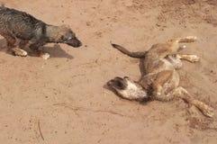 lustige Hundespiele in der Natur stockfoto