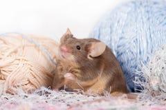 Lustige inländische Maus versteckt sich unter Verwicklungen des Garns Lizenzfreie Stockfotografie
